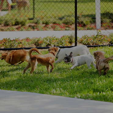Large Dog Park at Park Tanglewood Apartments